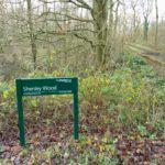 Saturday afternoon in Shenley Wood, Milton Keynes