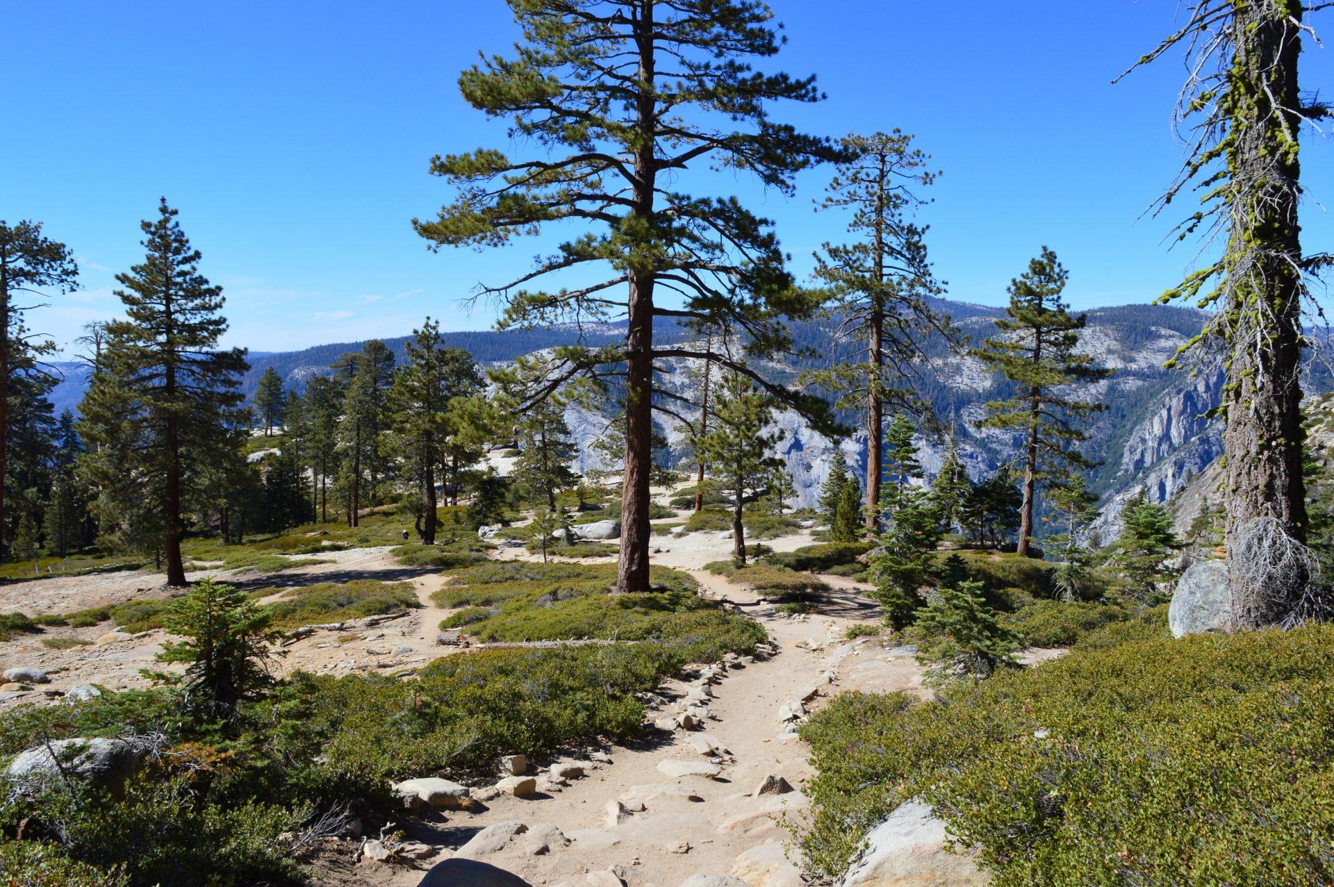 The Taft Point Trail