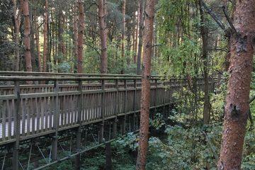 Tree top walk Salcey Forest