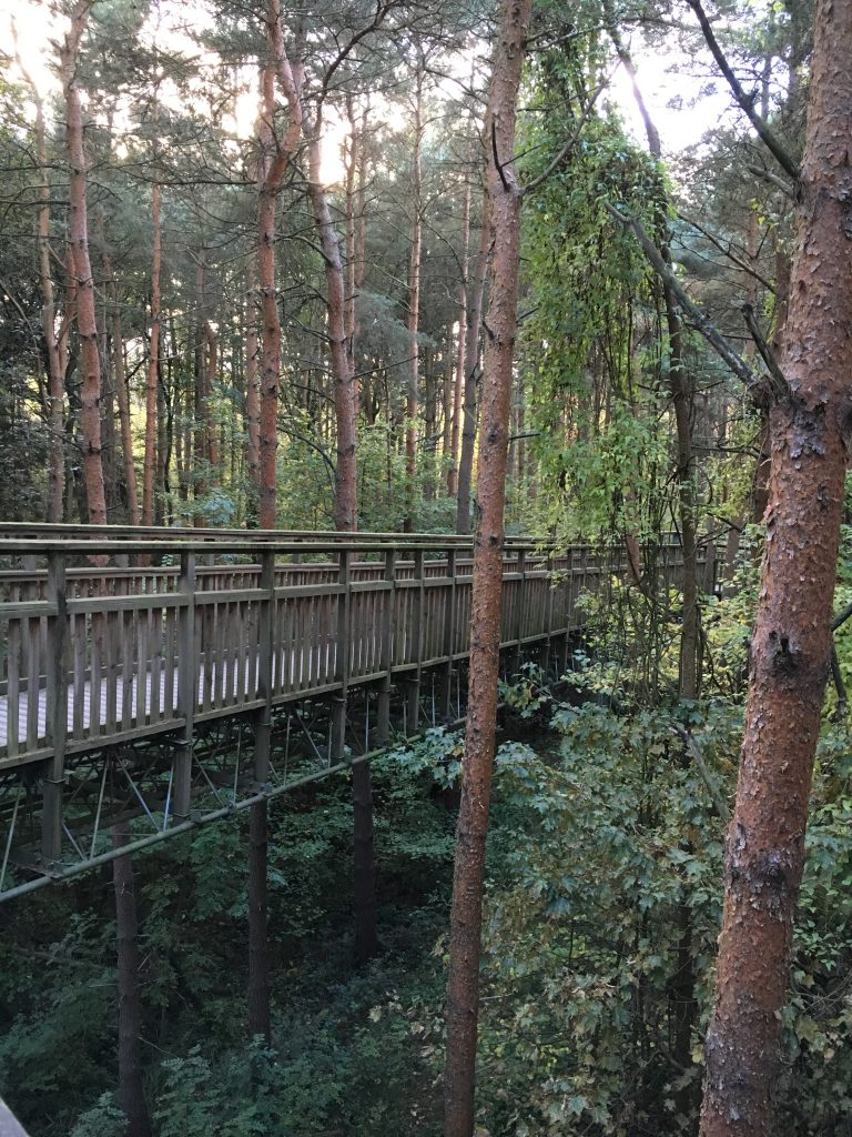 Tree top walk Salcey Forest