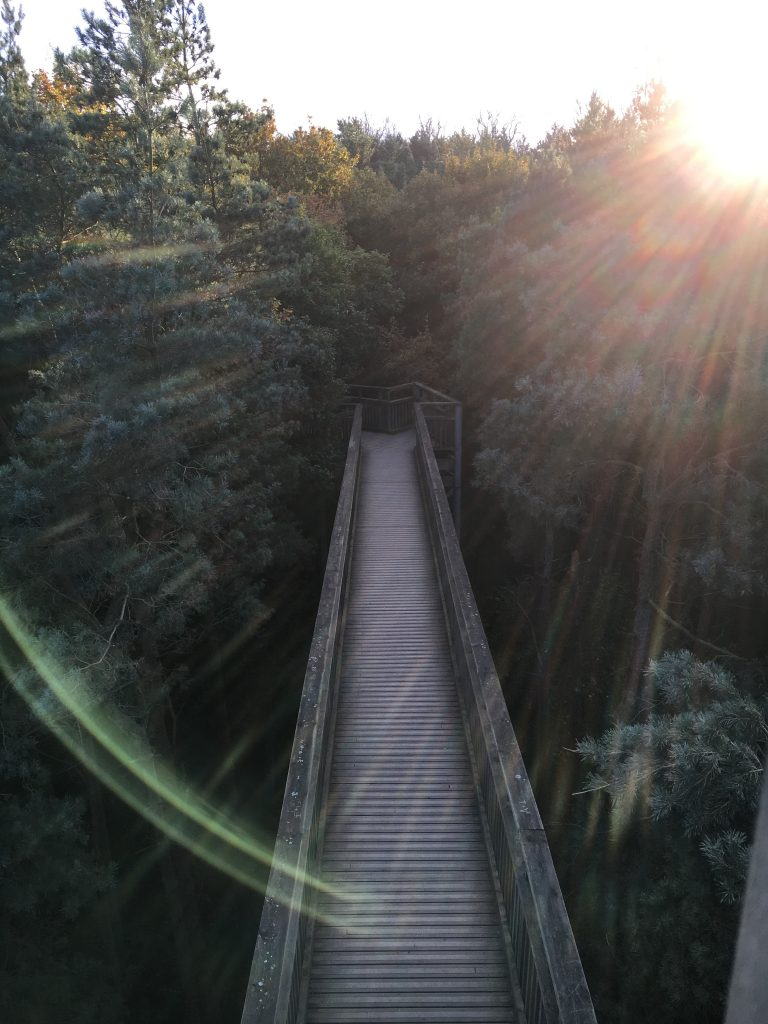 Tree top walkway Salcey Forest